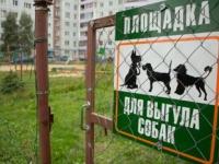 С думой о собаках