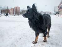 Собака и город